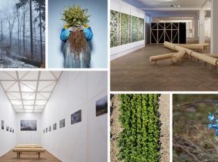 Jak Dělat Les? Výstava, která se vyhýbá klišé