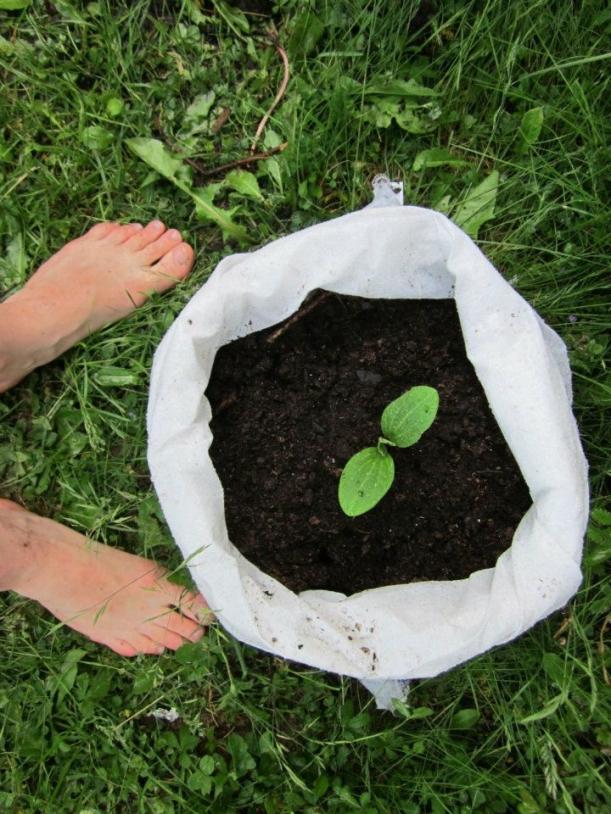 Inspirace - Pěstuji, pěstuješ, pěstujeme