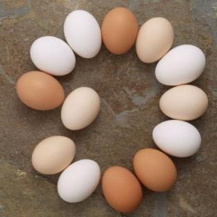 Diffrent-Types-Eggs-512X384-2184