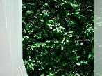 Kaskádové zahrady - KKCG