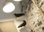 Insidecor /Designblok 2014/ Installation_Insidecor_DesignBlok_02