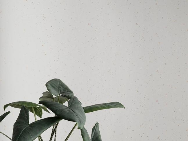 Tapeta Confetti Off-White