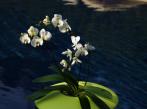 Květináč NINFEA 57