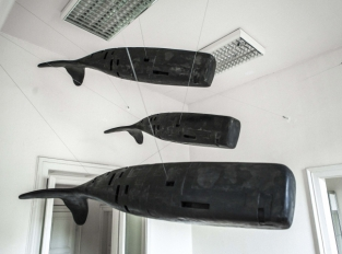 Herd of sperm whales (Robots)