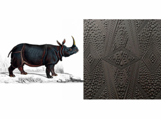 Extinct Animals - Dwarf Rhino