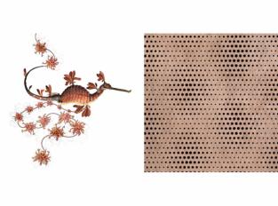 Extinct Animals - Blooming Seadragon