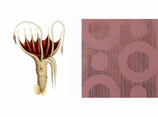 Extinct Animals - Umbrella Squid