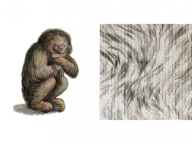 Extinct Animals - Blushing Sloth