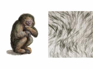 Extinct Animals - Blushing Sloth